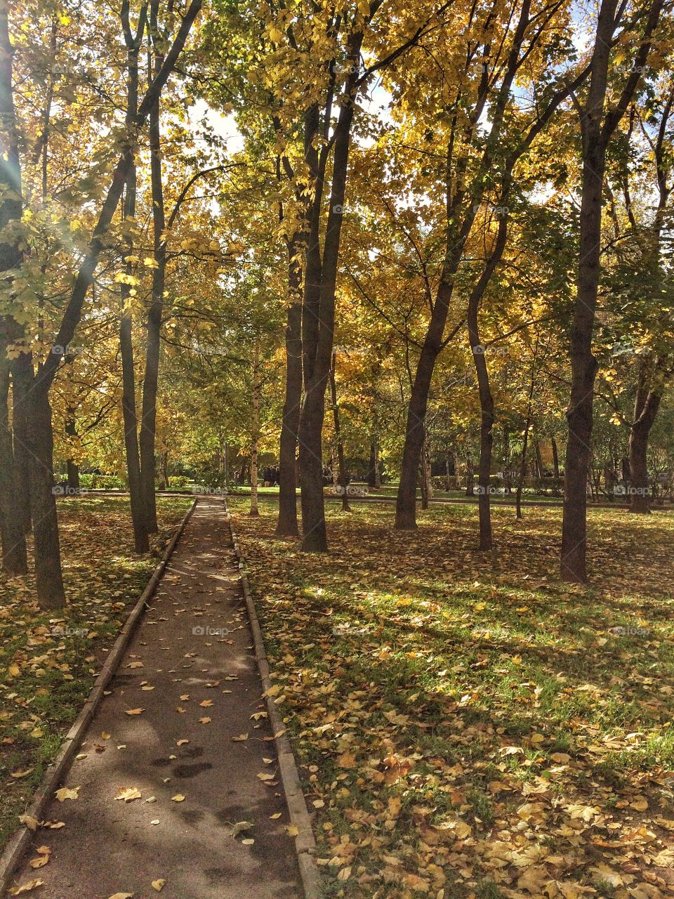 Strolling through the autumn park