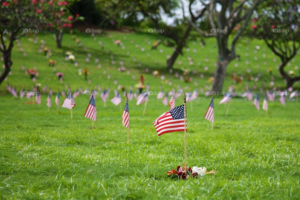 Flags in a Cemetery
