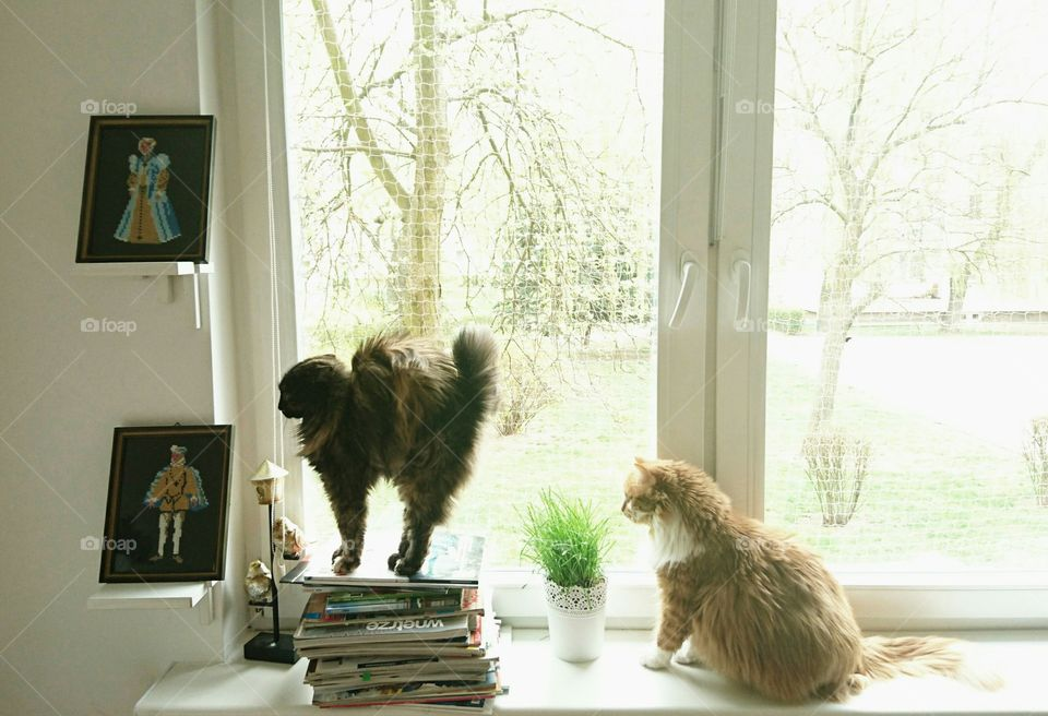 #pets #cat #love #sweet #animal