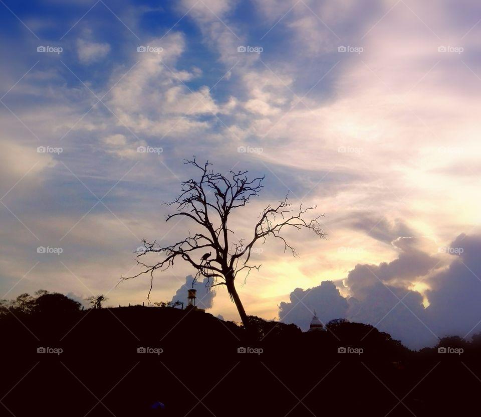 mots beautiful trees in kaudulla national park in sri Lanka sid of lake