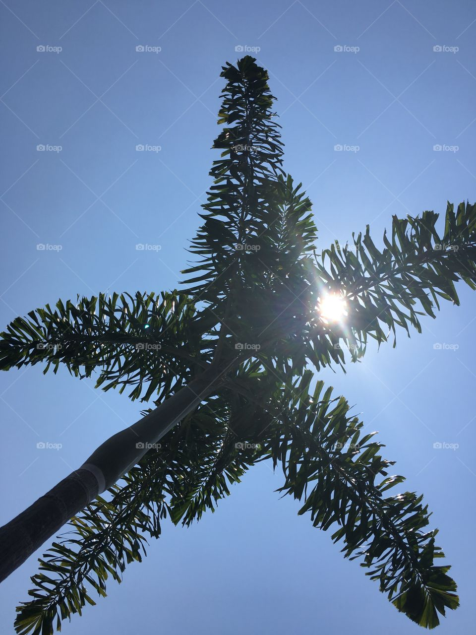 Palm tree and sun, the paradise - Singapore, on the top of the Marina Bay Sand