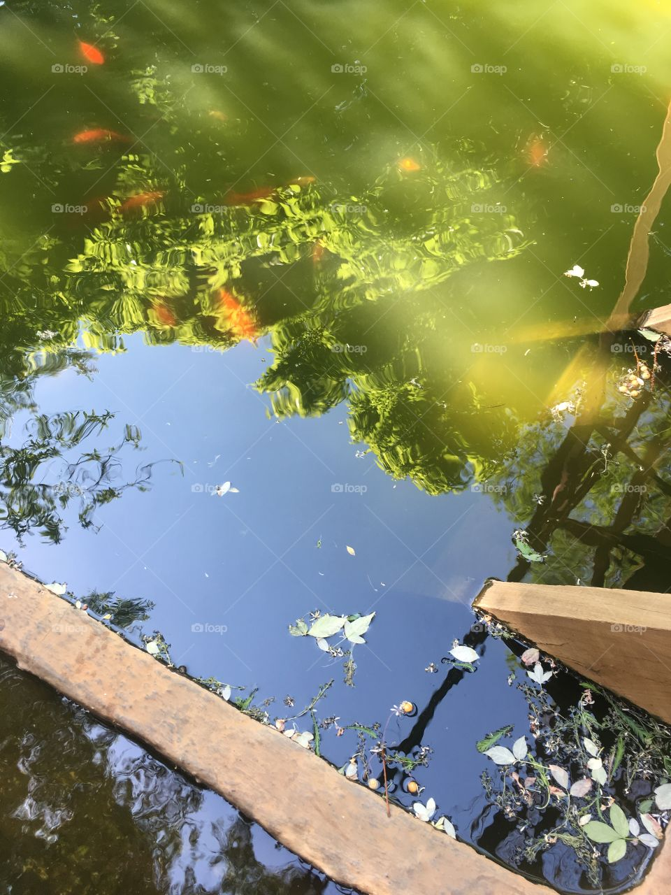 Murky fish pond