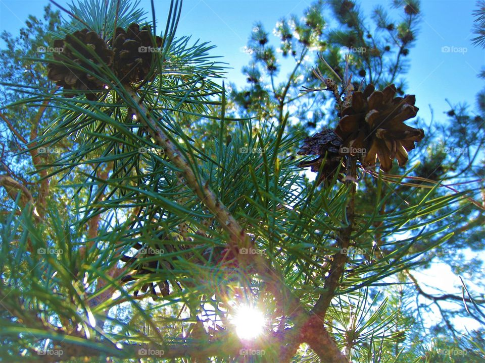 Tree green sunlight day outdoor summer