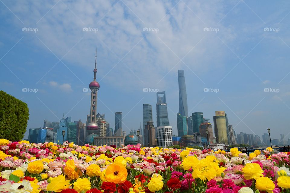 Shanghai, China 4/2/18 Vacation.  A Lake of flowers.