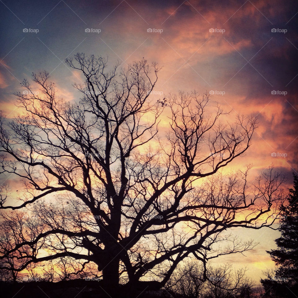 loudon virginia cemetery pretty tree sunset by loveferrets1