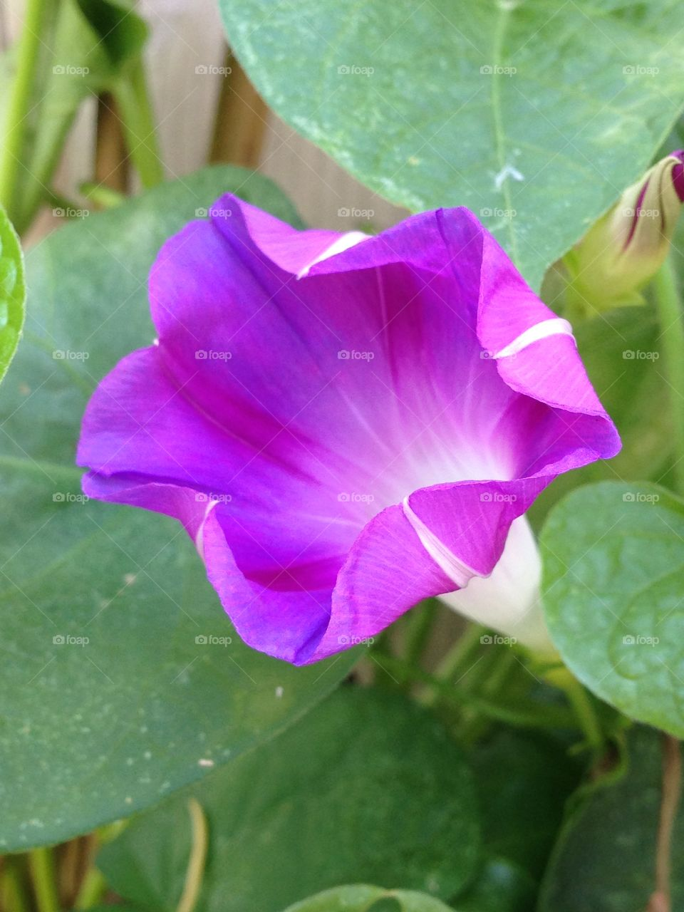 High angle view of purple flower