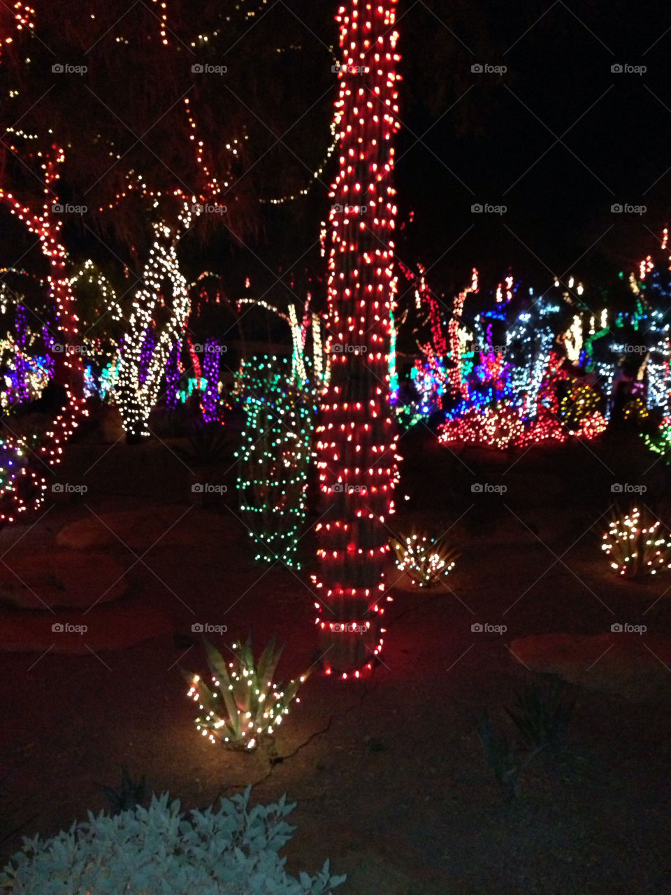 ethel m factory christmas christmas lights ethel m by snook911