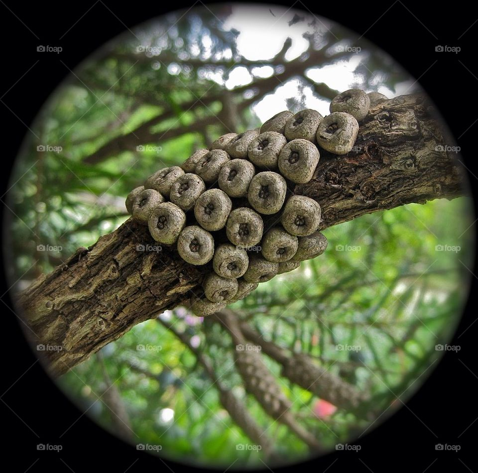 Cheerios Growing on Tree