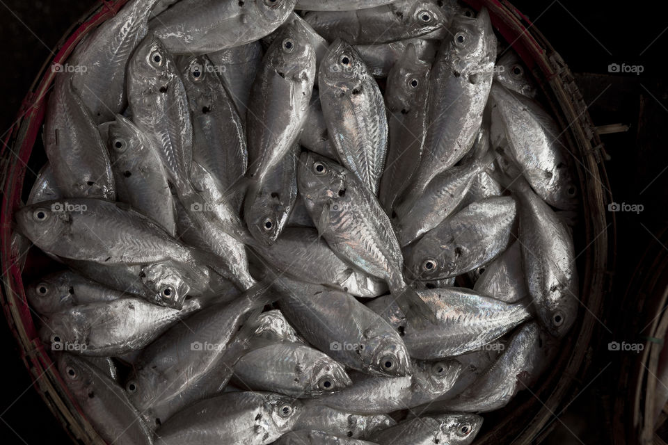 High angle view of fishes in basket