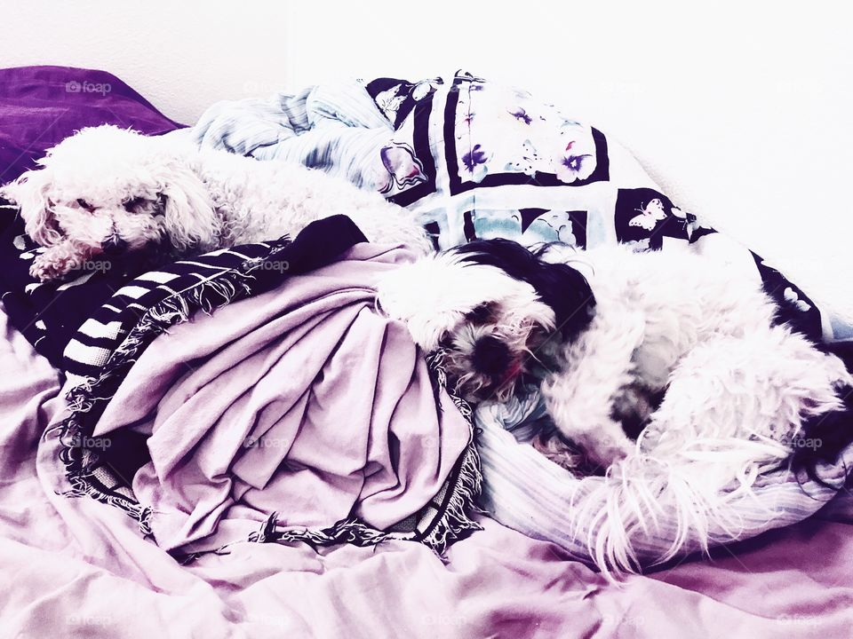 Rascal & Oreo in my unmade bed.