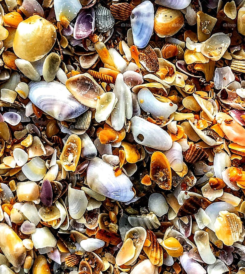 Where seashells congregate ...