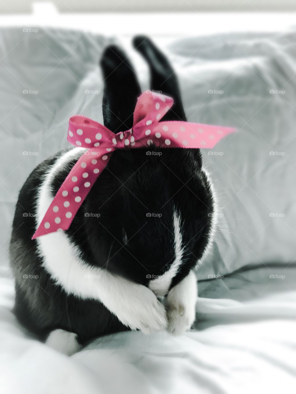 Ballerina Bunny cleaning face