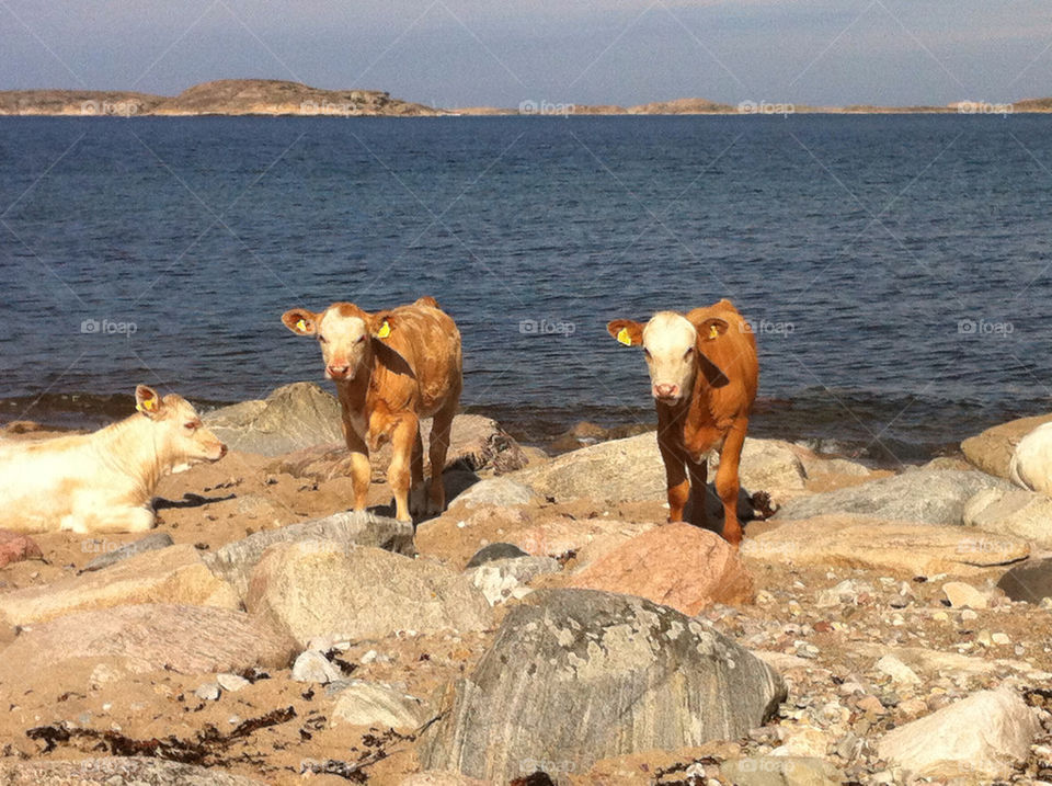 beach sea sweden rocks by haq