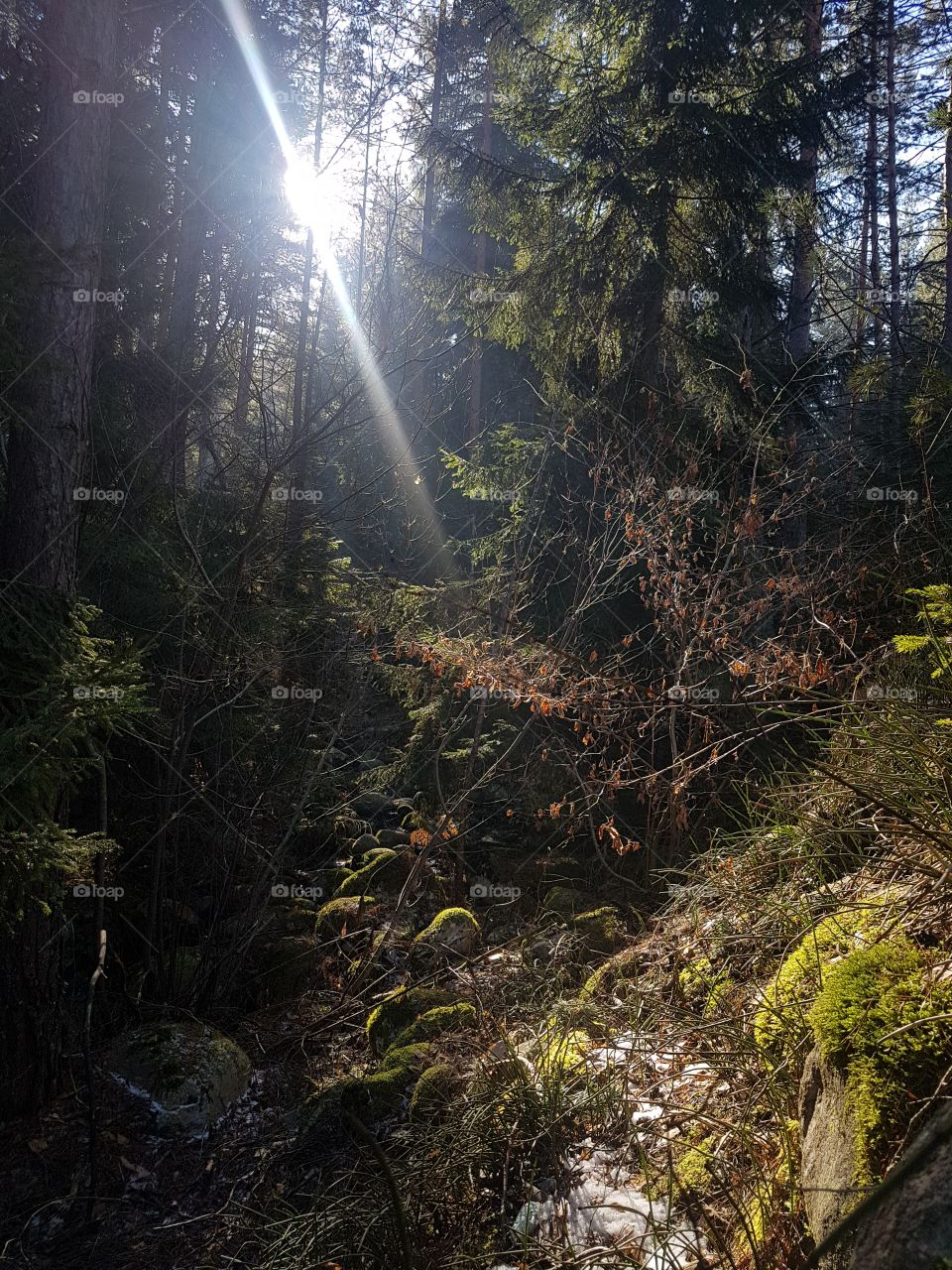sunrays through the forrest. lord of the rings nature