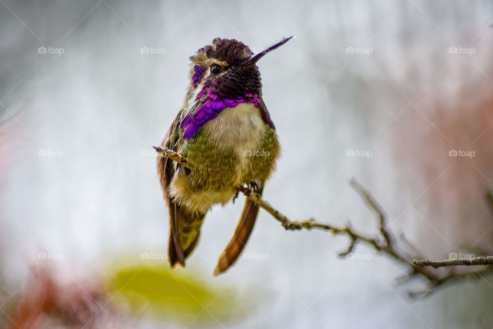 Bird, Wildlife, Nature, Outdoors, Animal