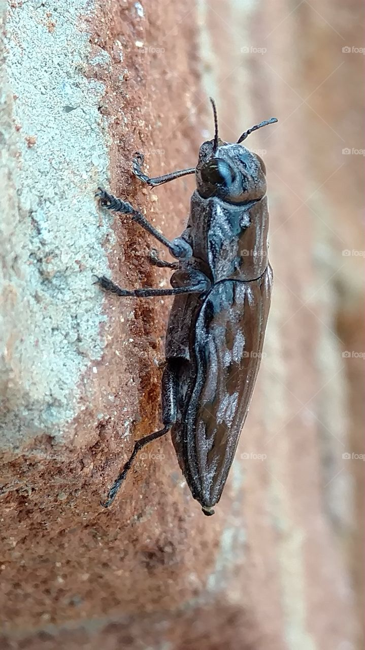 Insect, Invertebrate, No Person, Beetle, Nature