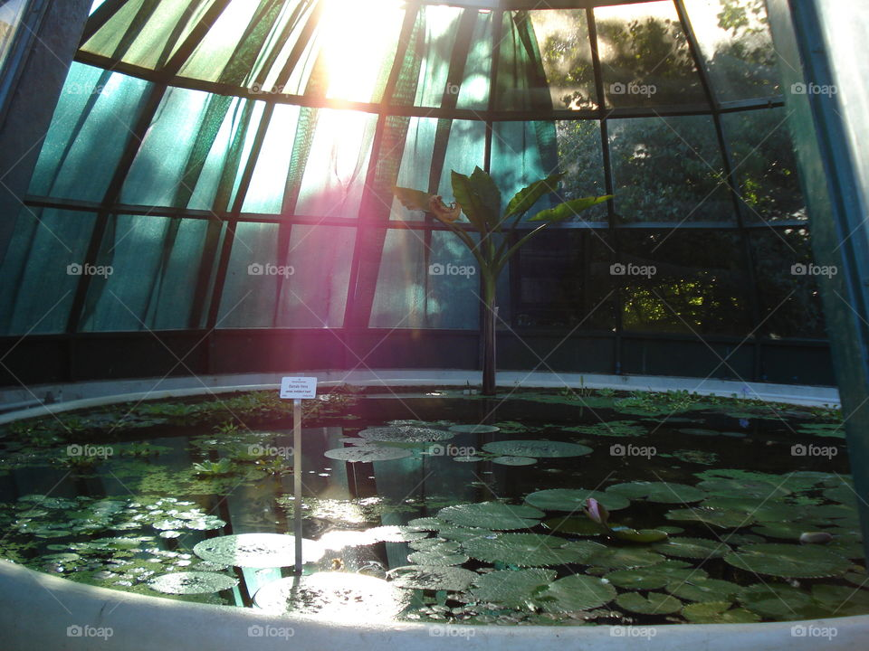 Water Lily Greenhouse