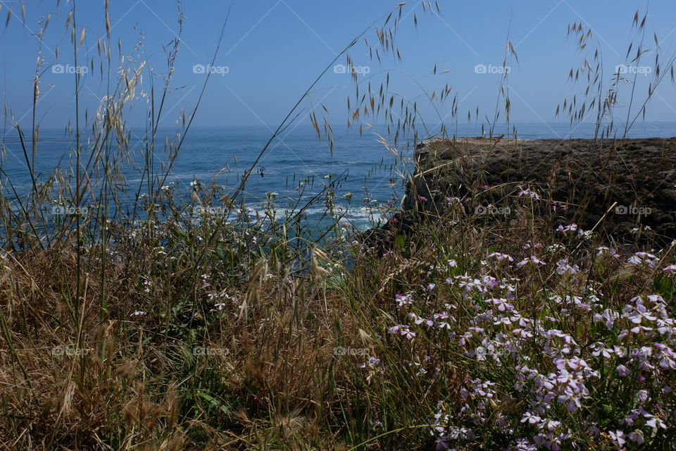 Grass and wildflowers on cliff