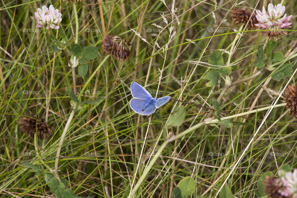 Blue butterfly in the grass