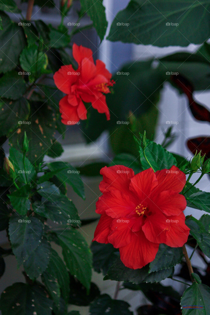 Foap florida summer flowers stock photo by arenasm florida summer flowers izmirmasajfo