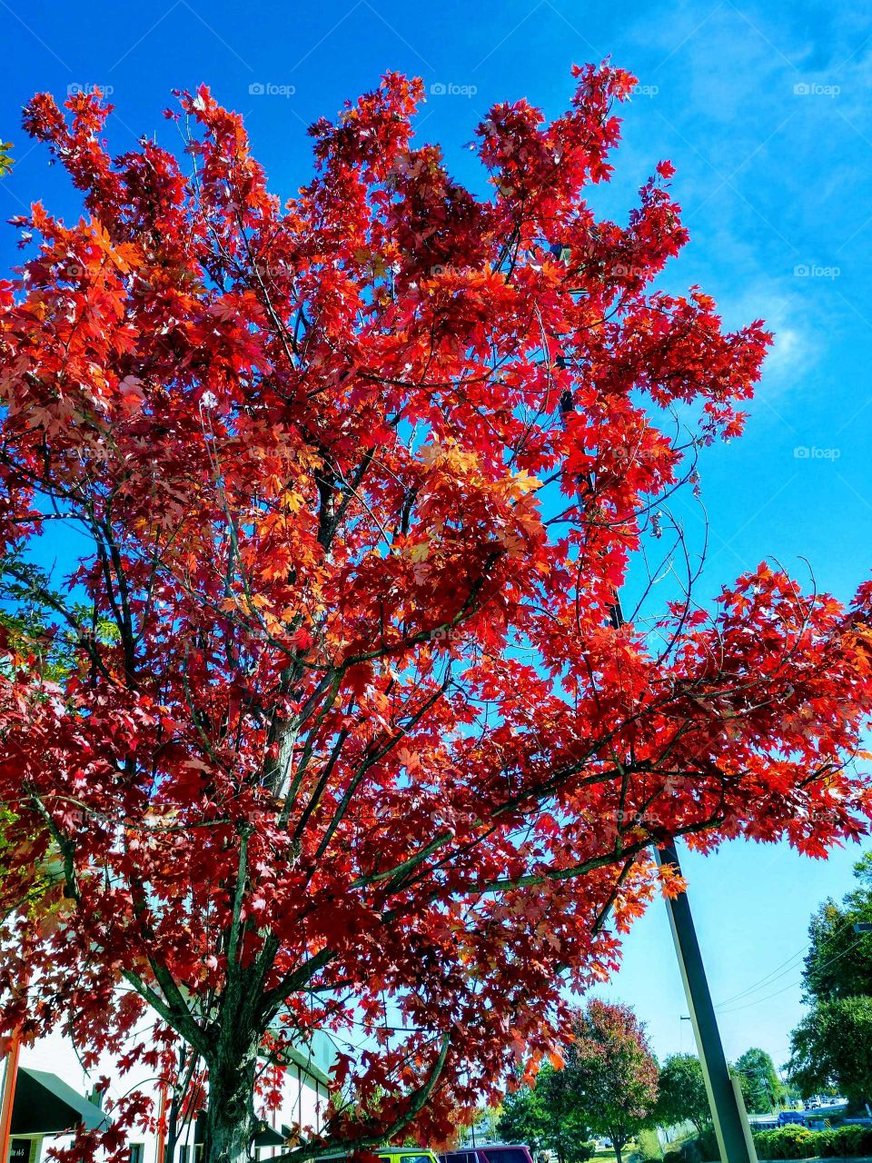 Tree, Nature, Season, Leaf, No Person