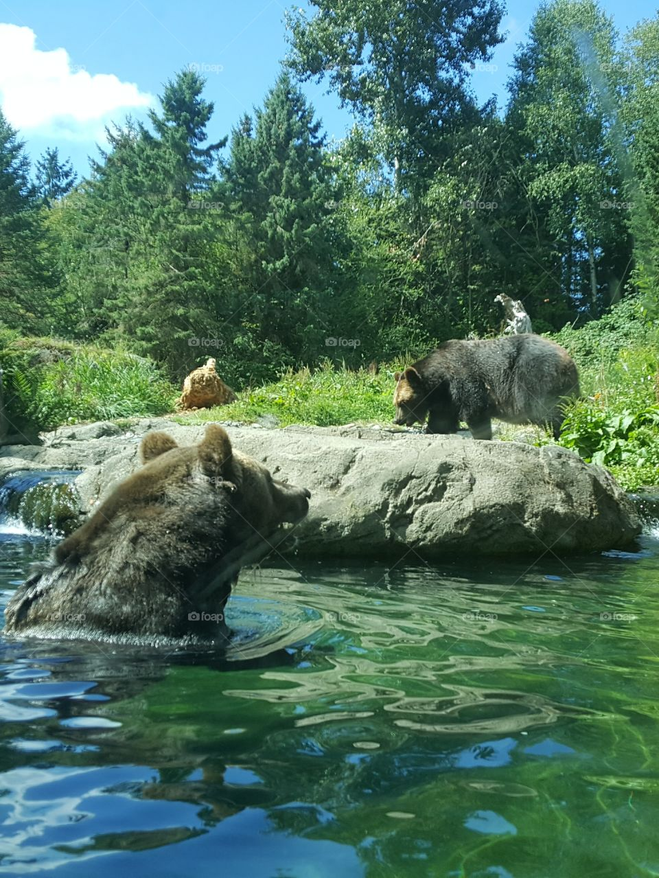 grizzly exhibit