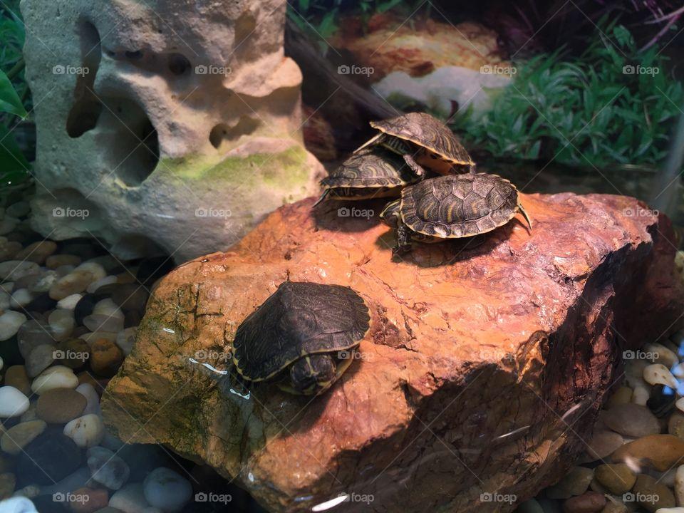 Leonardo, Donatello, Michelangelo and Rafael hanging out before the big fight! Ninja Turtles