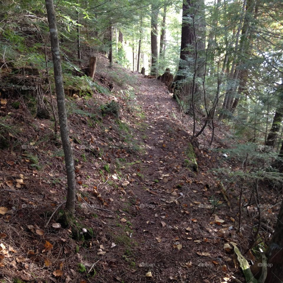 Nature trail