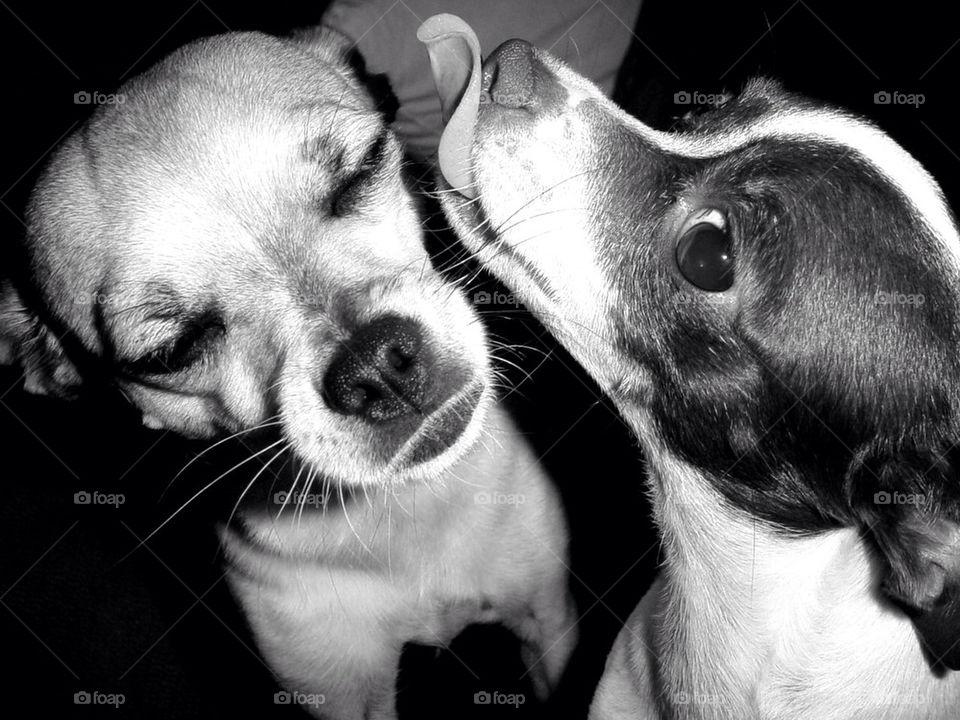 dog friends lick by adub