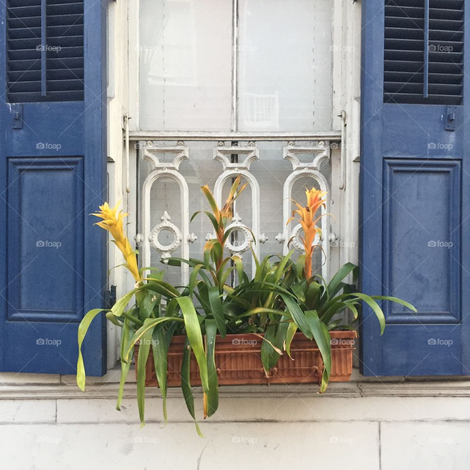 Flowers in New Orleans. New Orleans' French Quarter serves up beautiful colors and botany.