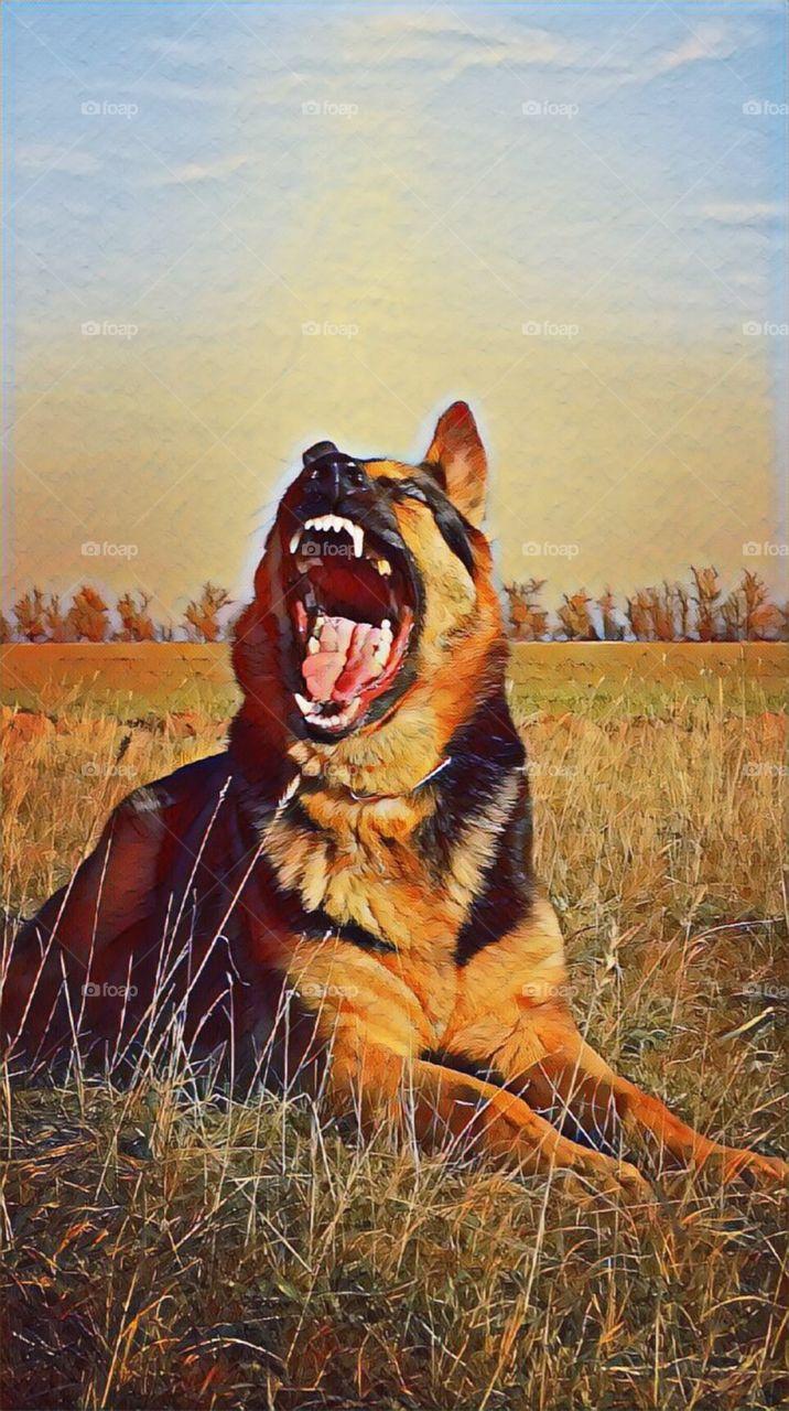 Shepherd dog art