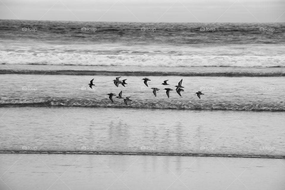 Birds flying above the shallow water while tide  coming up