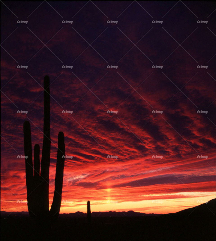 sunset night usa cactus by ccrocker