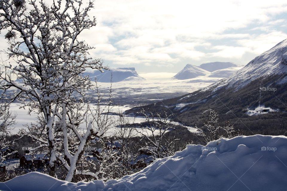 Frozen tree in winter