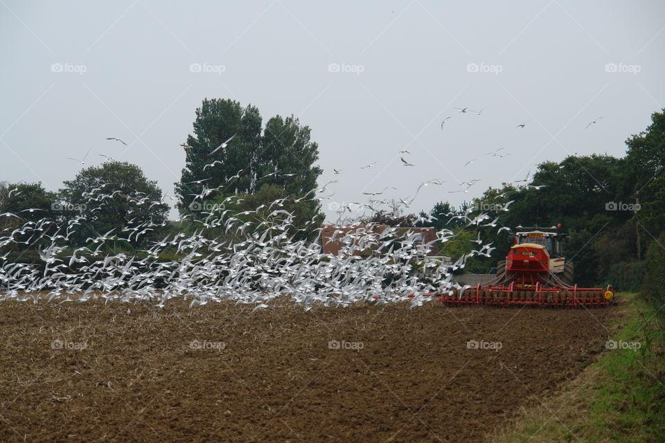 Ploughing the fields . Ploughing the fields