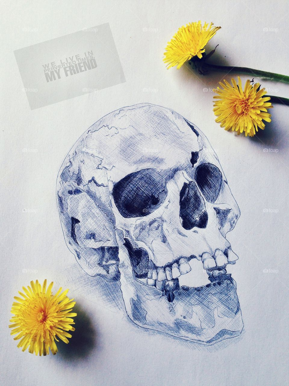Skull and yellow flowers . Sketch
