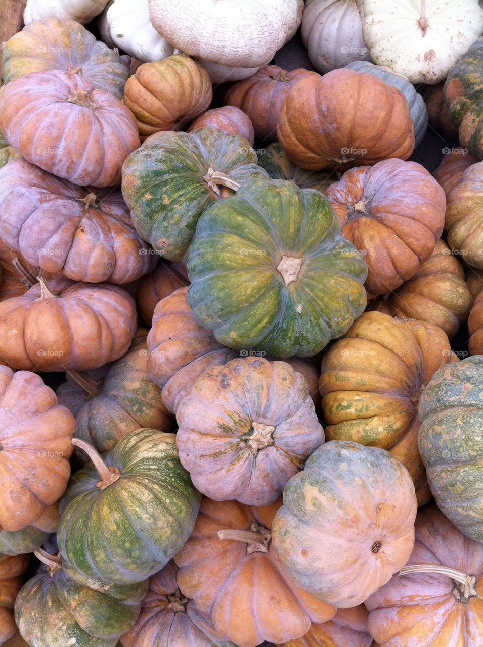A variety of pumpkins during autumn.