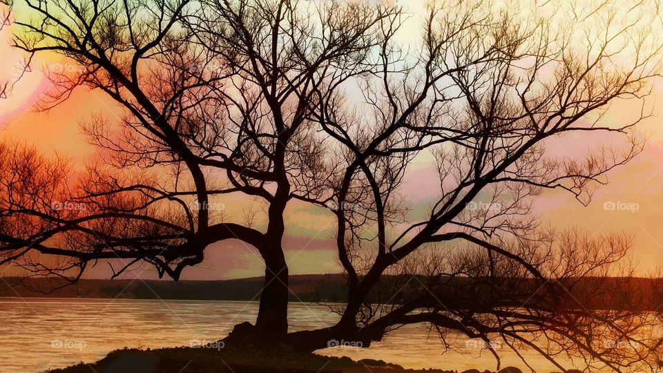 cool tree at the lake