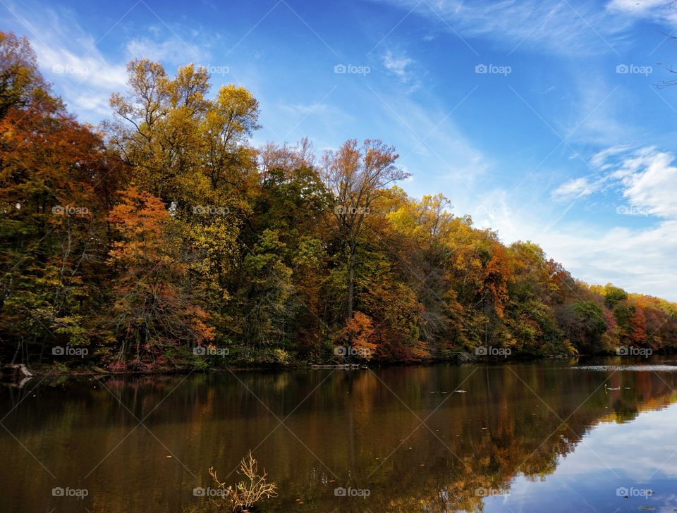 Colorful Trees Near Water in Fall