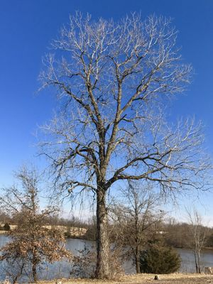 Scenic view of bare tree at lake side