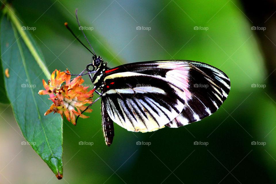 Butterfly having a snack