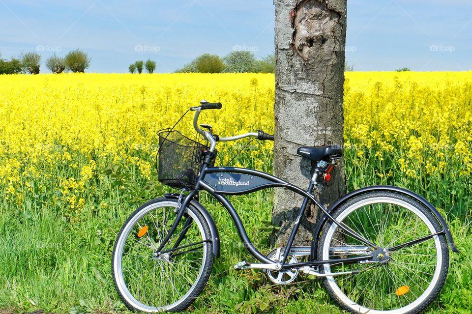 Bike by the tree