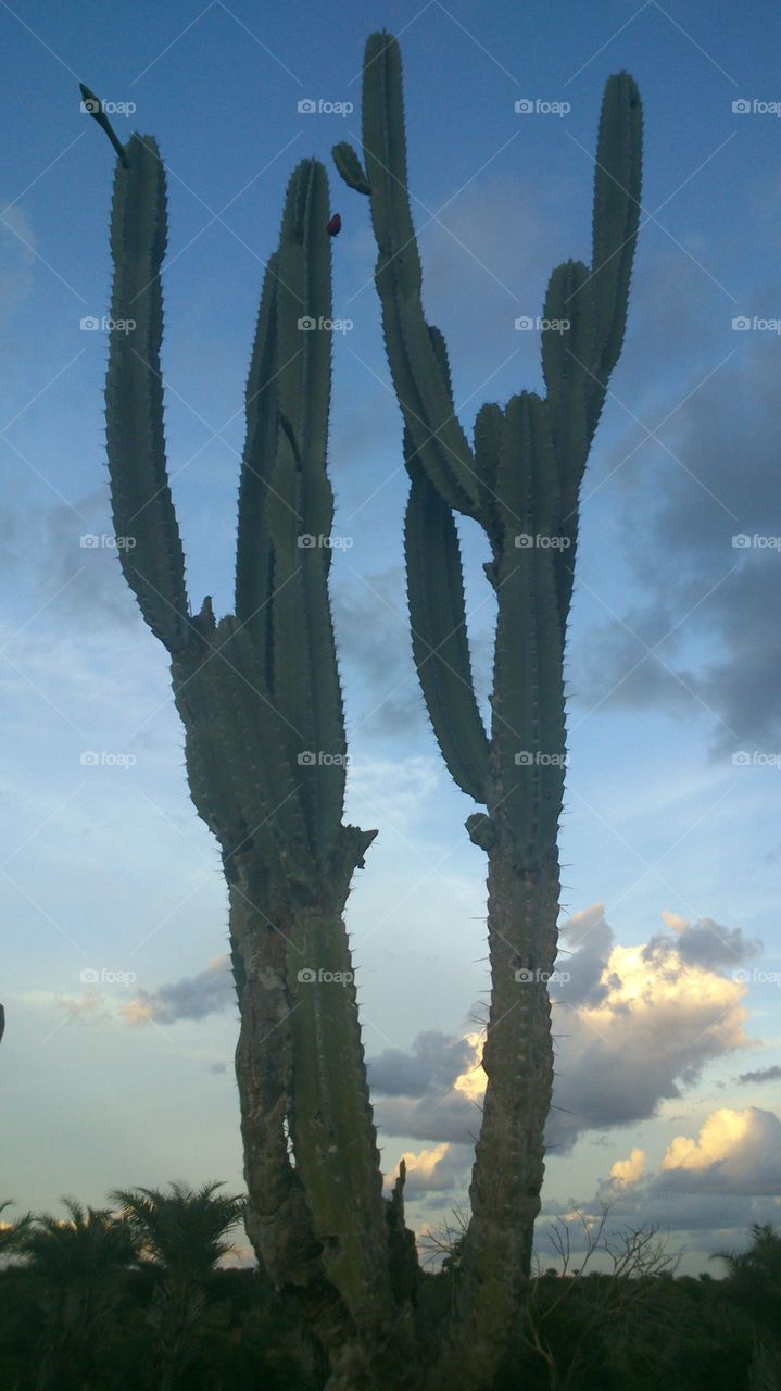 Close-up of cactus against cloudy sky