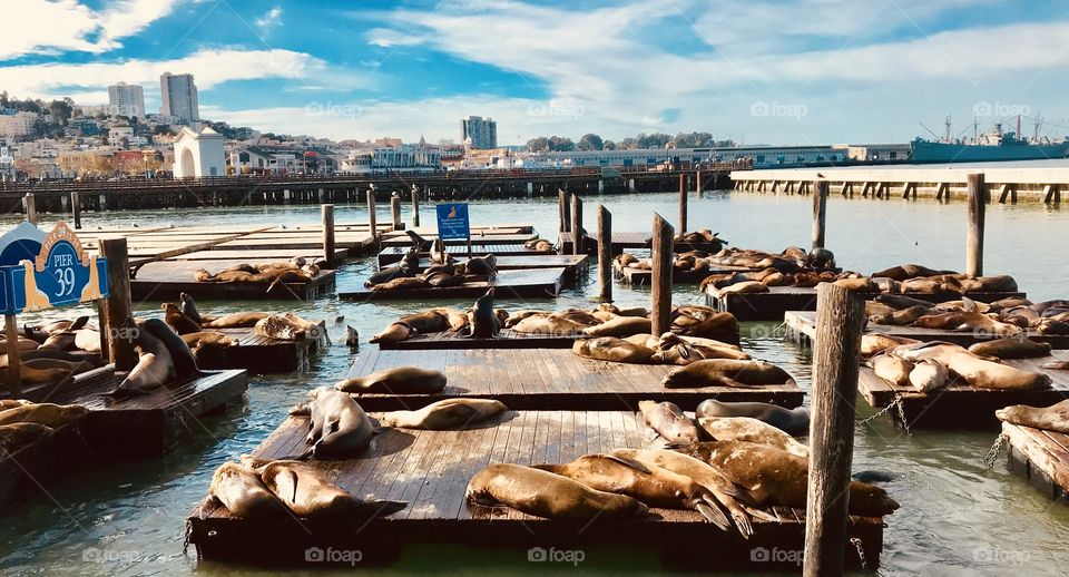 The seals are just lounging out getting some sun like the rest of us. Except they fight for the best spot.. so exactly like some of us.