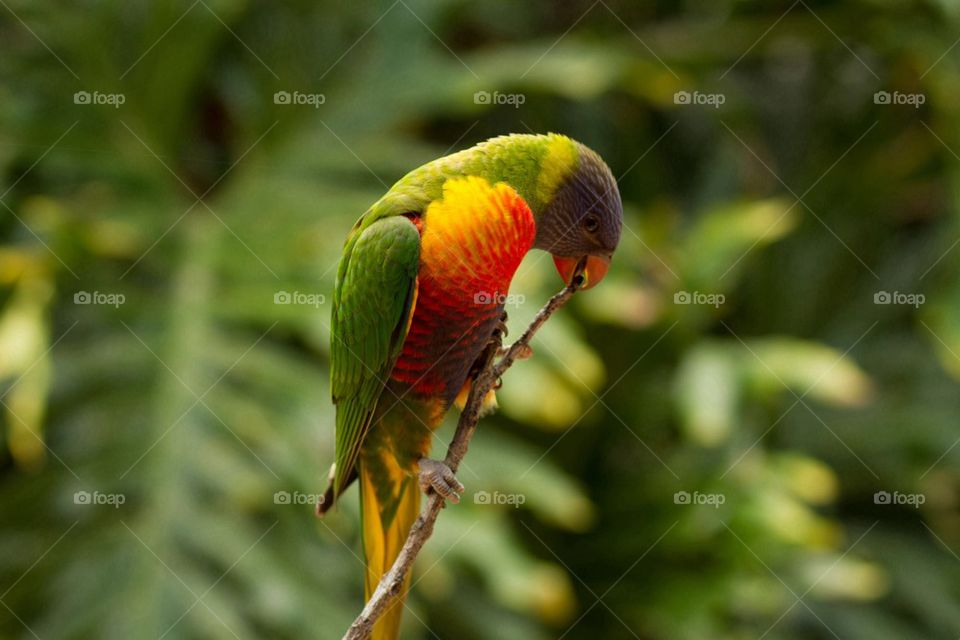 Close-up of colorful parrot