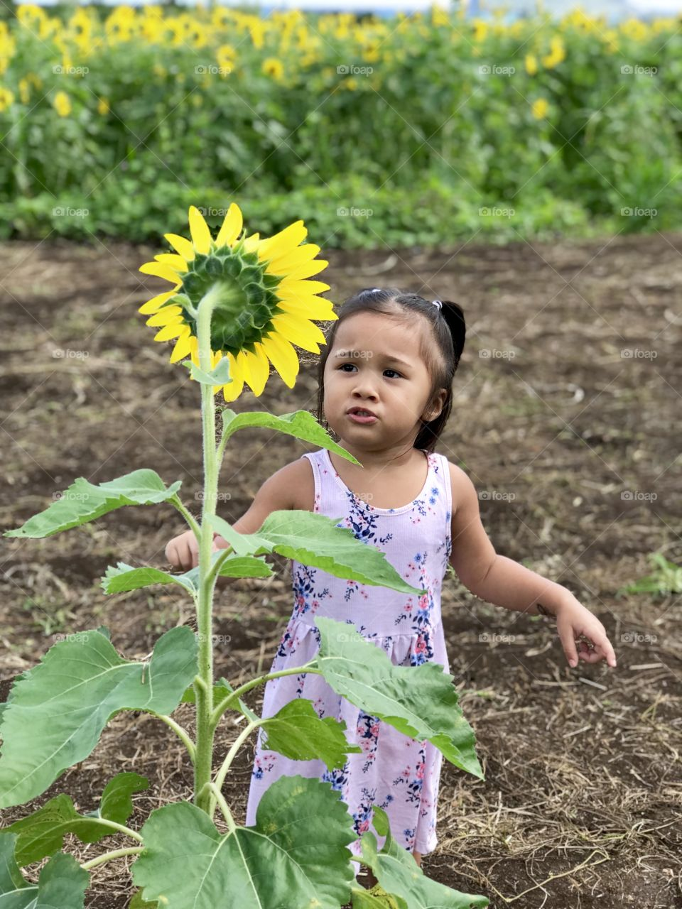 This 2 year old is curious about her  surroundings. She's not sure if she should touch the flower :)