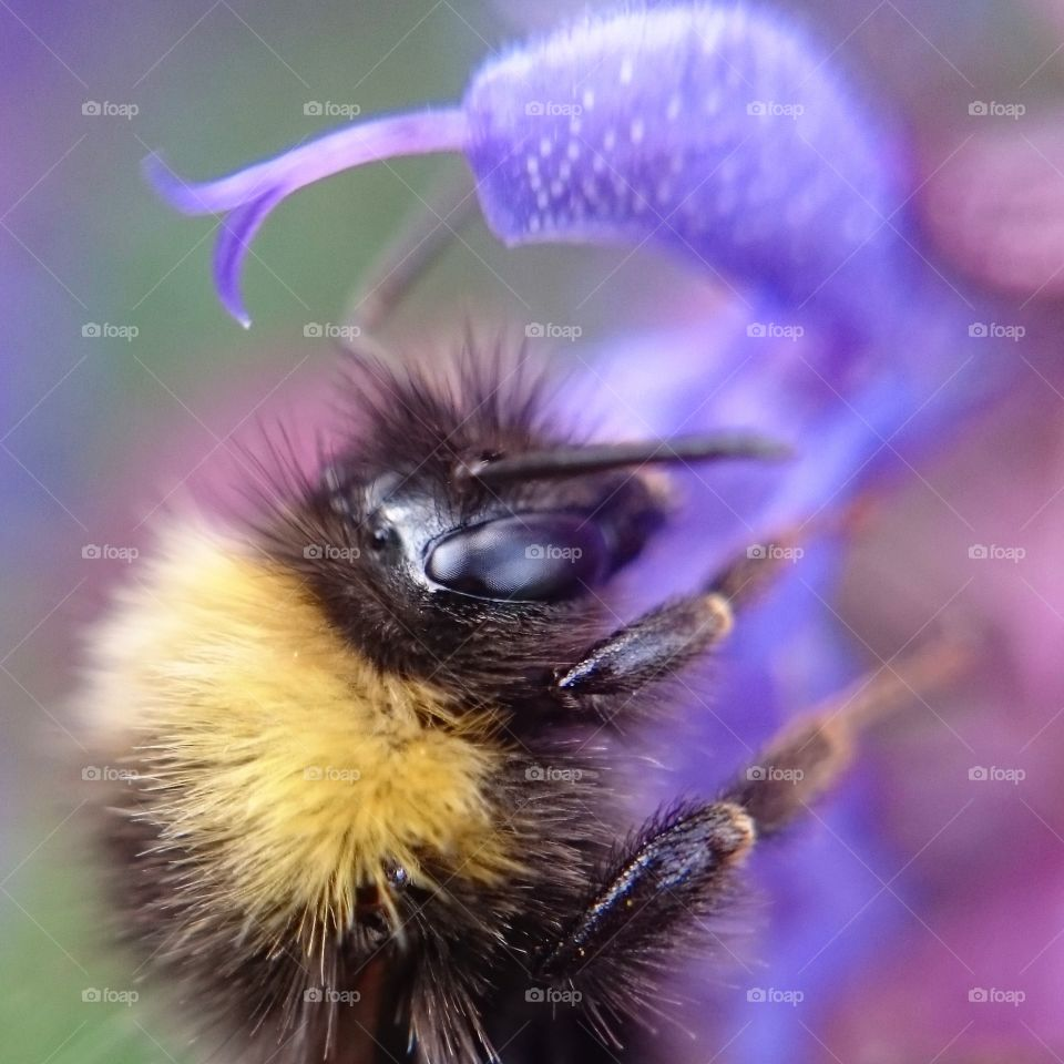 Close-up of bumble bee