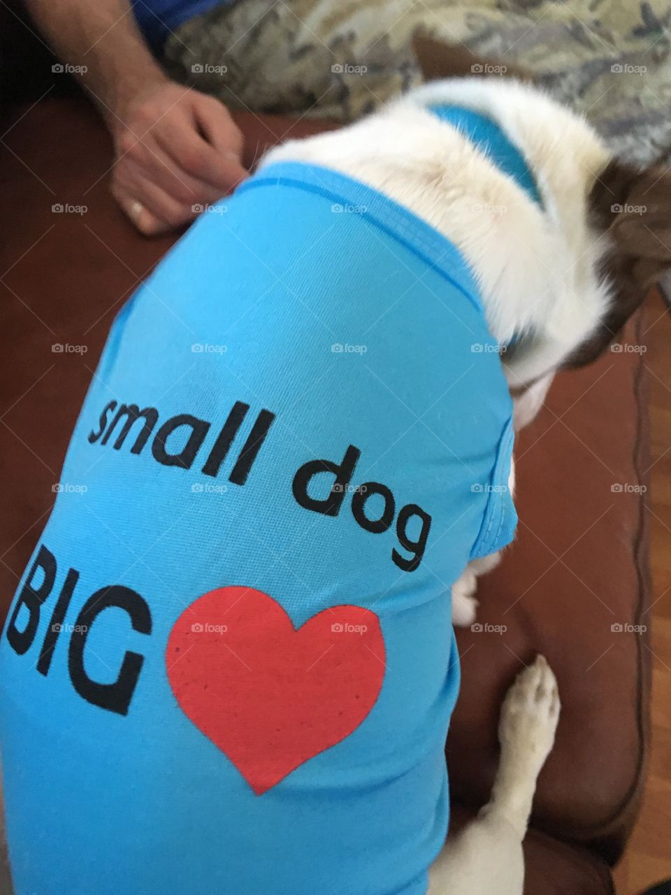 New shirt for this little guy! Just fits perfectly small dog big heart! Got it from my favorite place to shop.