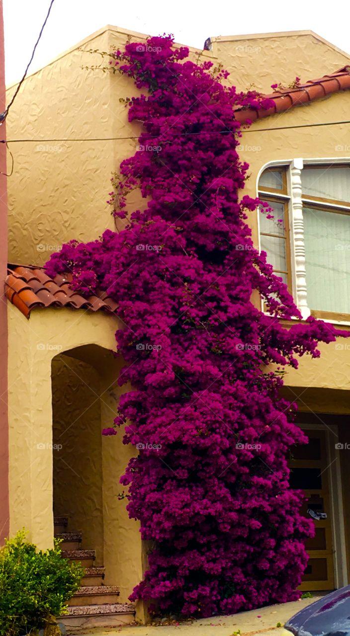 Flowers climbing house wall.