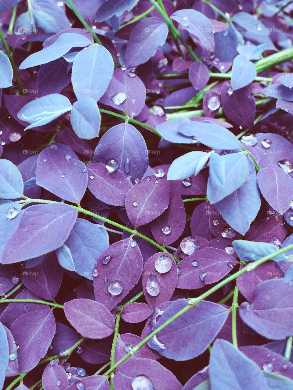 Perverted colors . Wet plants in the garden